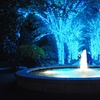 Atlanta Botanical Garden – Up to 54% Off Holiday-Lights Outing