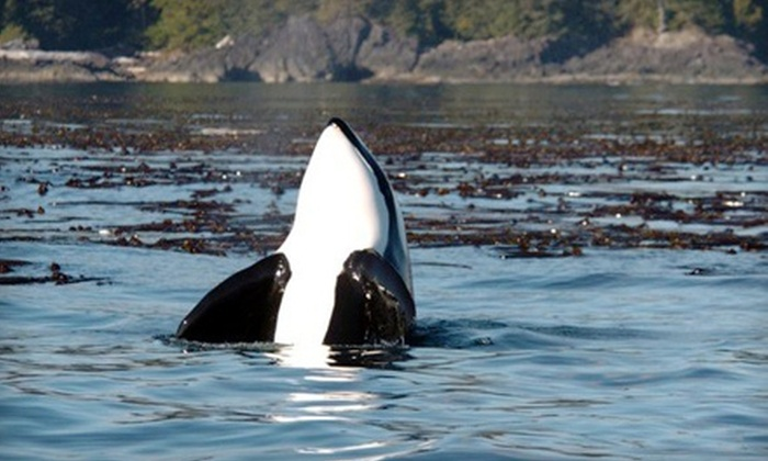 The Whale Centre - Tofino: Wildlife Tour from The Whale Centre in Tofino. Three Options Available.