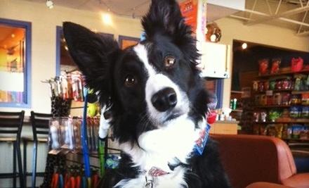 Community Bark Dog Wash & Coffee Bar - Community Bark Dog Wash & Coffee Bar in Bayside