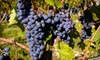 Strawbale Winery - Renner: $10 for a Wine Tasting for Four at Strawbale Winery ($20 Value)
