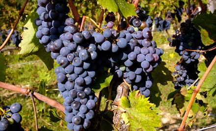 Strawbale Winery - Strawbale Winery in Renner