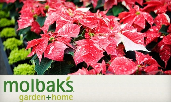 Molbak's - Seattle: $15 for $30 Worth of Holiday, Home, and Garden Goods at Molbak's in Woodinville