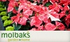 Molbak's - Town Center: $15 for $30 Worth of Holiday, Home, and Garden Goods at Molbak's in Woodinville
