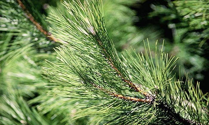 California Christmas Tree Recycling - Multiple Locations: Removal and Cleanup for an up-to 8-Foot or 11-Foot Christmas Tree from California Christmas Tree Recycling (Up to 51% Off)