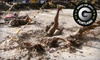 The Dirty Dash - Downtown: Entry for One or Two to The Dirty Dash Race on July 21 at the Howard Buford Recreation Area (Up to 55% Off)