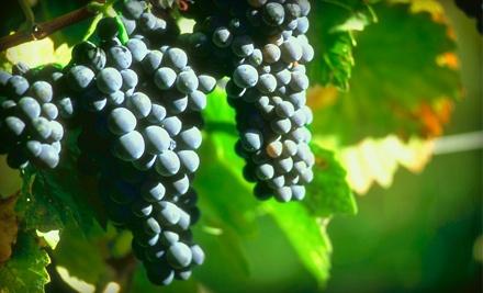 Decoding Wine - Decoding Wine in