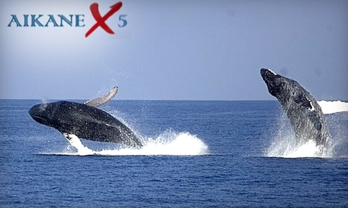 Aikane X5 - Lahaina: $74 for a Two-Hour Whale-Watching Tour on the Aikane X5 ($149 Value)