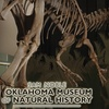 $8 for Natural-History Museum Tickets