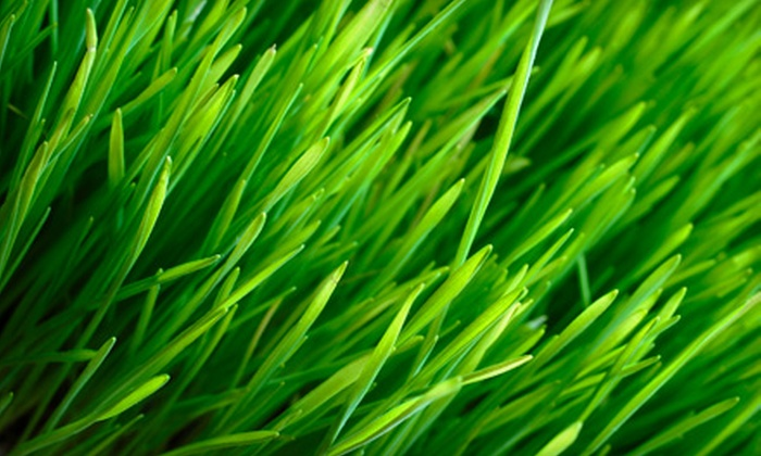 Clean Air Lawn Care - Corpus Christi: Sustainable Lawn Care from Clean Air Lawn Care. Five Options Available.