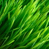 Up to 63% Off Sustainable Lawn Care