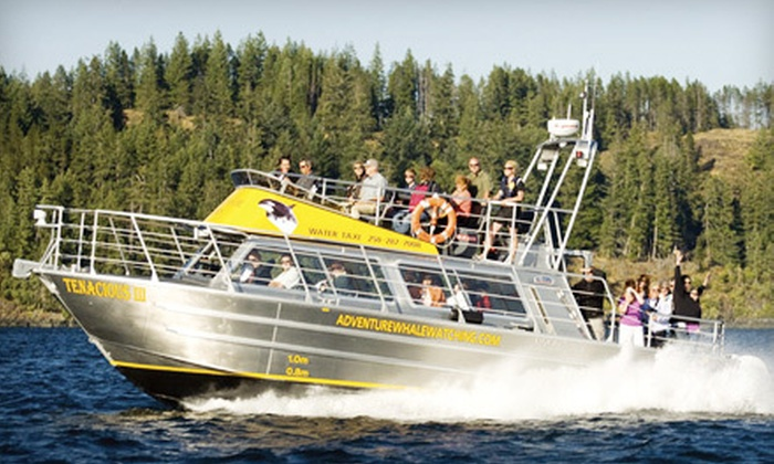Discovery Marine Safaris - Campbell River: $59 for a Marine Wildlife Safari from Discovery Marine Safaris in Campbell River ($129 Value)