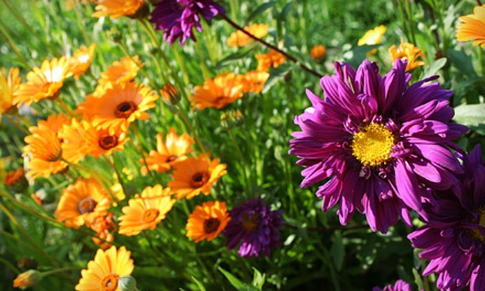 EweTopia Farms - Palmer: $20 for $40 Worth of Flowers, Plants, and Herbs at EweTopia Farms in Palmer