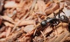 PestManagers, Inc. - Jackson: $35 for $70 Worth of General Pest-Control Services from PestManagers, Inc.
