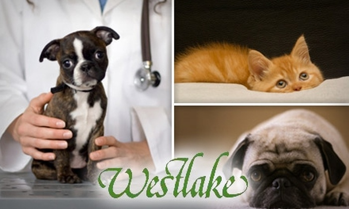 Westlake Animal Hospital - West Lake Hills: $24 Pet Exam at Westlake Animal Hospital ($48 Value)