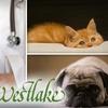 Westlake Animal Hospital - West Lake Hills: $24 Pet Exam at Westlake Animal Hospital ($48 Value)