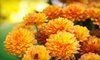 Half Off Flowers & Plants from Botanica Gardens