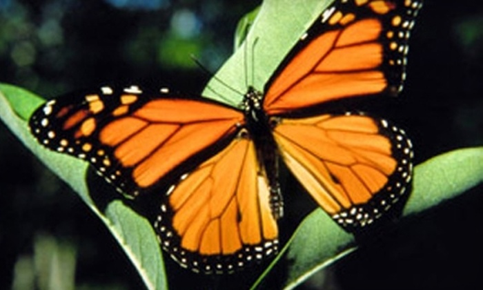 butterfly pavilion colorado coupon
