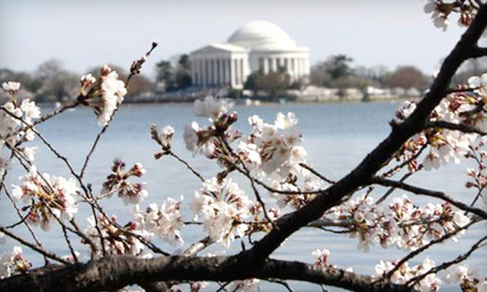CapitolCity DC Tours and Events, LLC - Woodley Park: $10 for a Cherry Blossom or Historical DC Tour from CapitolCity DC Tours and Events, LLC ($20 Value). Five Tours Available.