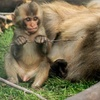 Half Off at Discovery Wildlife Park in Innisfail