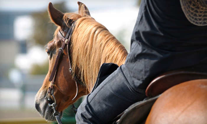 Castle Rock Arabians - Pine Creek: One, Three, or Five Private One-Hour Horseback-Riding Lessons at Castle Rock Arabians in Walnut Creek (Up to 63% Off)