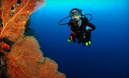 Adventure Diving - Adventure Diving in Crystal River