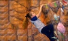 The Climbing Wall - Point Breeze North: Five Days, One Month, or Three Months of Rock Climbing at The Climbing Wall (Up to 64% Off)