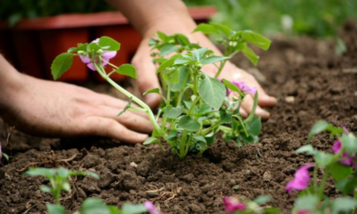 """FlowerPeddler - Archdale:  $10 for a Six 4"""" Herb Plants at FlowerPeddler in Archdale (Up to $24 Value)"""