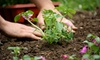 "Flowerpeddler - Archdale:  $10 for a Six 4"" Herb Plants at FlowerPeddler in Archdale (Up to $24 Value)"