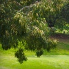 Up to 60% Off Golf Outing in La Mesa