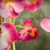 $10 for an Orchid or Bromeliad
