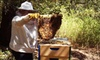 Thank Nature - Cotati: Beekeeping Class for One or Two at Thank Nature (Up to 59% Off)
