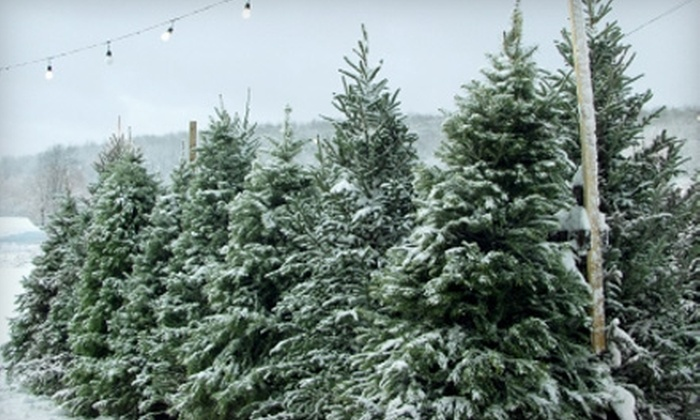 summit christmas tree farm