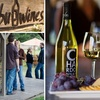 Up to 56% Off Wine Tasting for Two