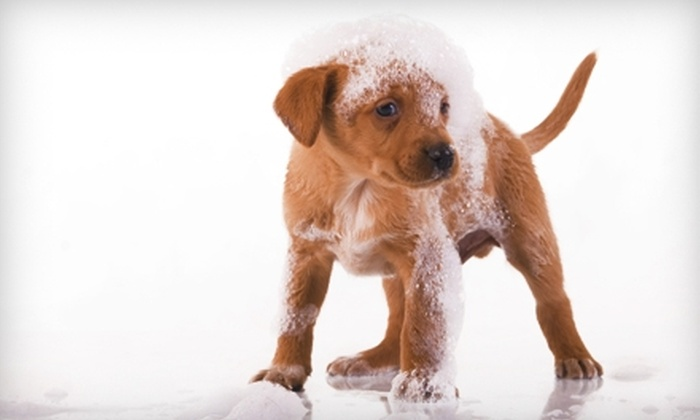 Yuppy Puppy Boutique & Spa - Ocala: 50% Off Grooming Services at My Yuppy Puppy Boutique & Spa. Two Options Available.
