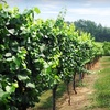 Half Off Fall Wine Tour in Hendersonville