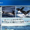 44% Off Whale-Watch Tour in Gloucester
