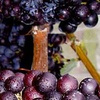 $5 for Winery Tour and Tasting
