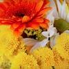 Half Off Flowers from Davis Florist & Greenhouse