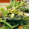 Half Off Organic Fare in Santa Monica