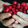 Up to 55% Cranberry-Wine Tasting for Two in Bala