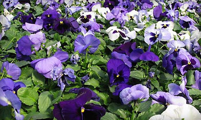 Hinsdale Nurseries - Willowbrook: $20 for $40 Worth of Plants, Flowers, and Gardening Supplies at Hinsdale Nurseries in Willowbrook