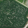Up to 60% Off Corn-Maze Outing and Pumpkins