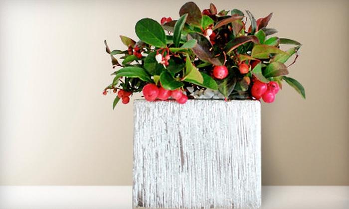 Kermodi Living Art - Grandview-Woodland: Botanical Living Art and Gifts or Berry Kisses Holiday Arrangement at Kermodi Living Art (Half Off)