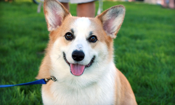 Your Dog Smiles Pet Services - Washington DC: $50 for Five 30-Minute Midday Dog-Walking Visits from Your Dog Smiles Pet Services ($100 Value)
