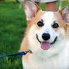 Half Off Dog-Walking Services