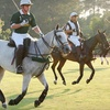 $10 for One Ticket to the Houston Polo Club