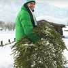 Hand-Delivered Fraser Fir Christmas Tree