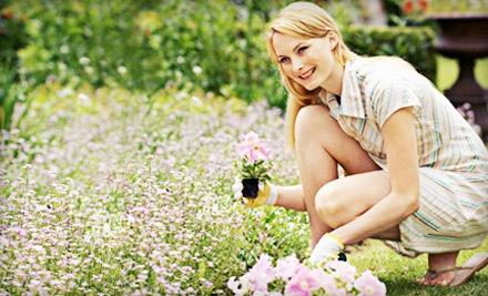 $40 Groupon to Main Line Gardens - Main Line Gardens in Malvern