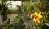 Denver Botanic Gardens - Cheeseman Park: Nature Outing for Two or Four to Denver Botanic Gardens (Up to Half Off)