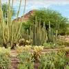 Desert Botanical Garden – $9 for Visit